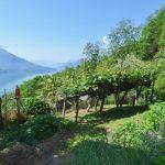 Comer See Gera Lario Haus mit Land uns Seeblick Garten